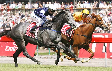 Horse_Efficient_07